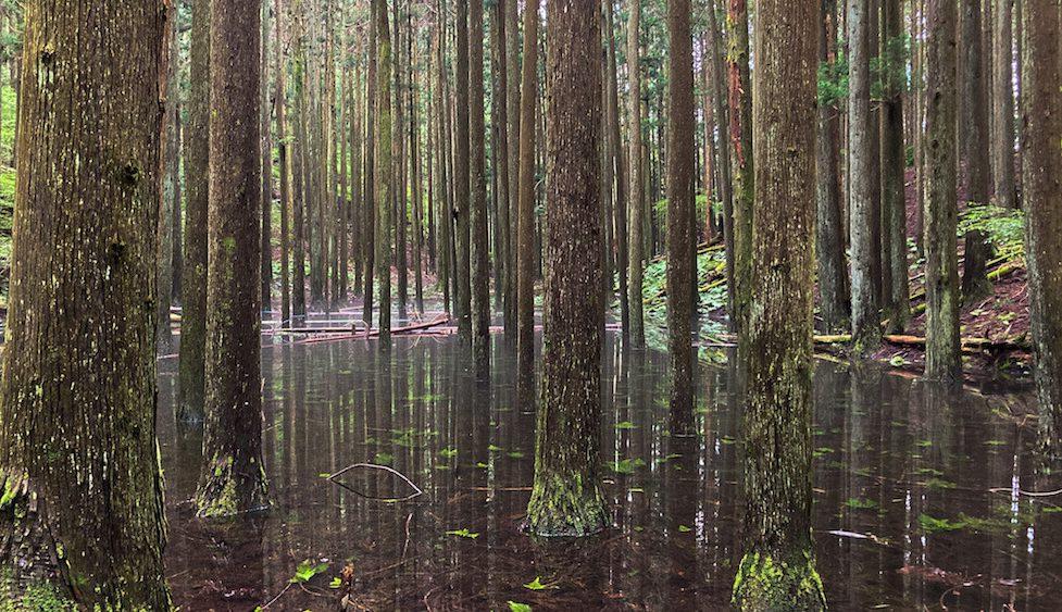 池の平の幻の池の画像